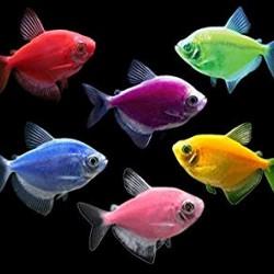 GLO FISH - оптовая продажа по доступным ценам.