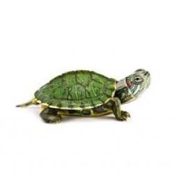 Аквариумные рептилии и земноводные - оптовая продажа по доступным ценам.