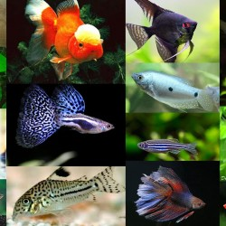 Аквариумные рыбки - оптовая продажа по доступным ценам.