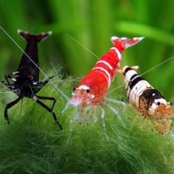 Ракообразные (креветки, крабы, раки) - оптовая продажа по доступным ценам.