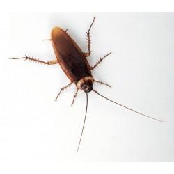 Таракан американский (Periplaneta americana), тыс. шт